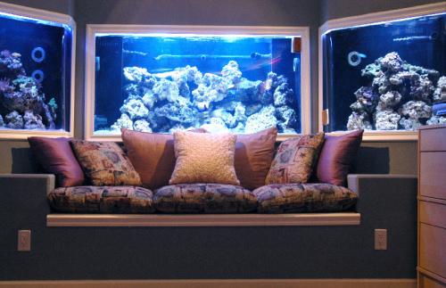 Custom Aquariums in Houston The Woodlands